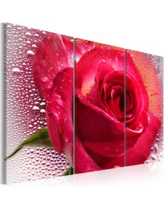 Obraz - Lady Rose - triptych